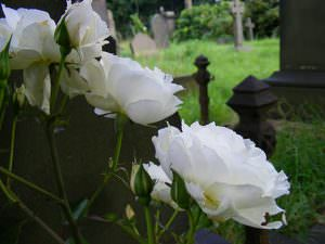 undercliffe cemetery flowers