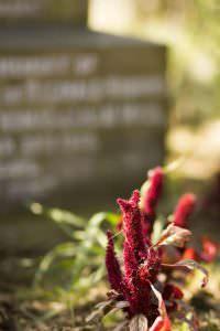 undercliffe flowers