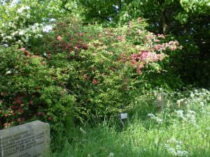 Bradford Heritage Undercliffe Cemetery