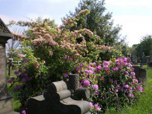 Undercliffe Cemetery Bradford flowers