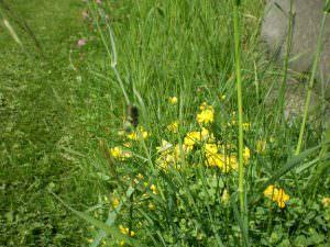 Undercliffe Cemetery Bradford graves