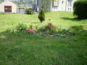 undercliffe cemetery plants
